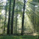 Forêt-1